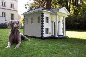 casa con mascota